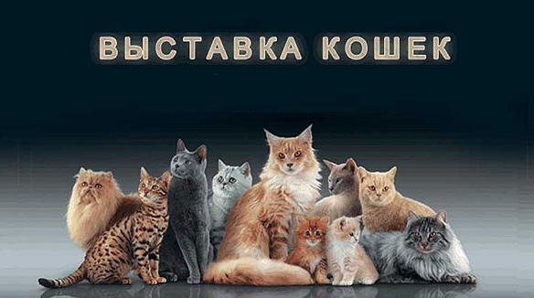 Зарубежный опыт: выставки кошек