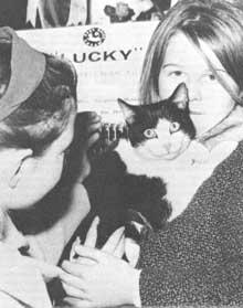 Самые симпатичные призы обычно присуждаются в конкурсе, где соревнуются непородистые кошки