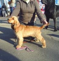 Прокуратура: Выставку собак в Вологде провели с нарушениями закона