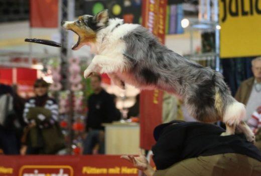 Выставка животных Heimtiermesse Berlin 2012