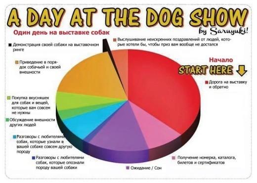"""На этой диаграмме схематично показано, чем занимаются участники выставки собак. С большой долей вероятности эту """"раскадровку"""" по времени и порядку действий можно отнести и к выставкам, в которых участвуют другие животные."""